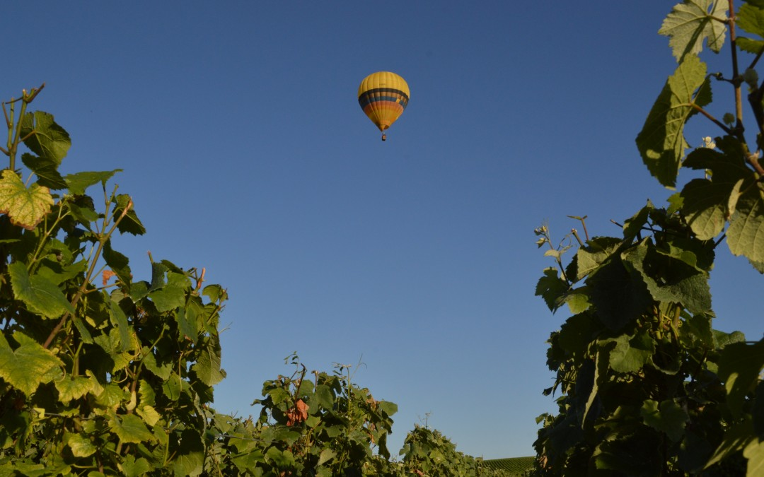 Montgolfiere en Champagne - Hot Air baloon in Champagne Reims Vineyards