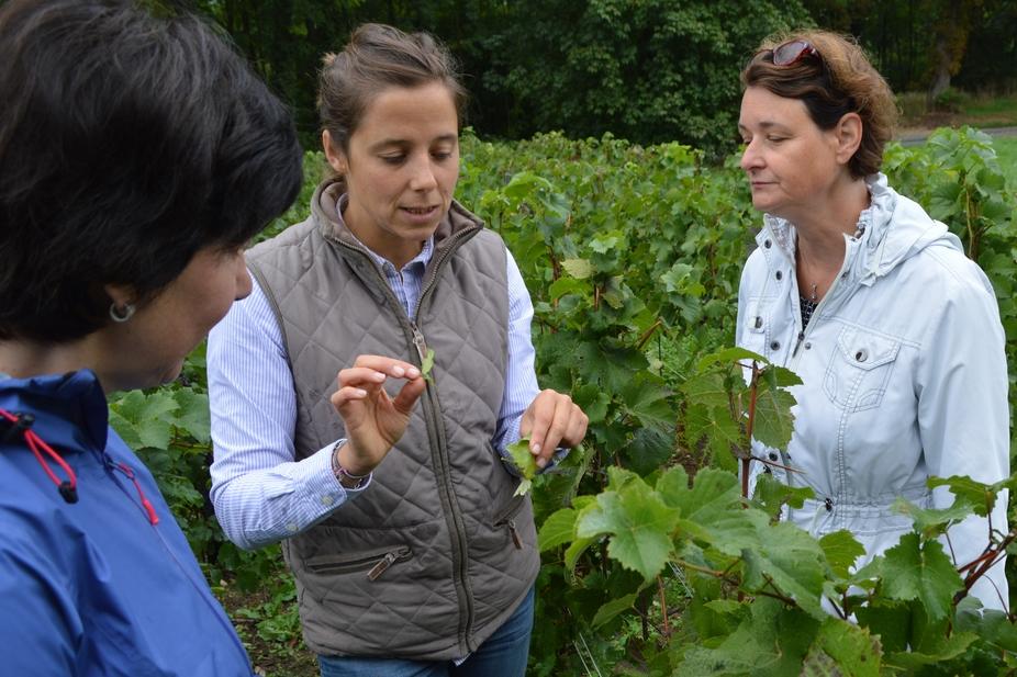 visite dégustation vigneron indépendant champagne le gallais boursault marne