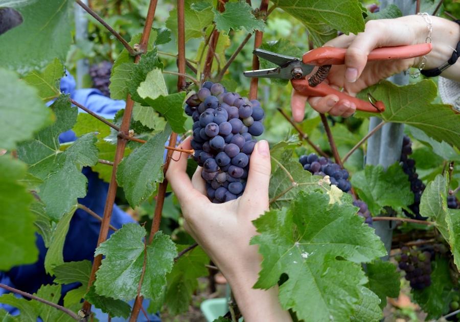 vineyard visit tour tasting Champagne